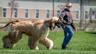 The Top 10 Long Haired Dog Breeds