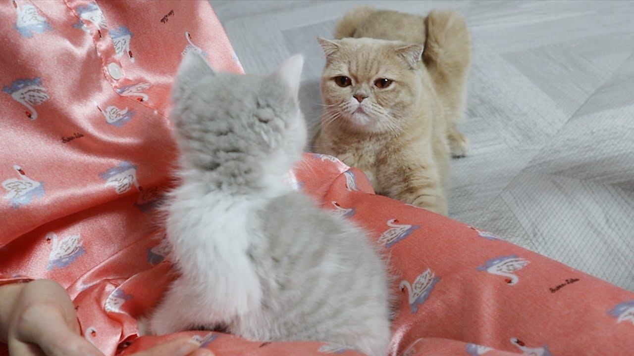 세상에서 가장 억울한 고양이