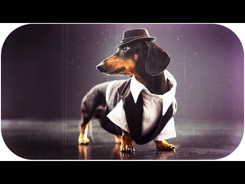 Never dance with poison girls! Cute & funny dachshund dog video!