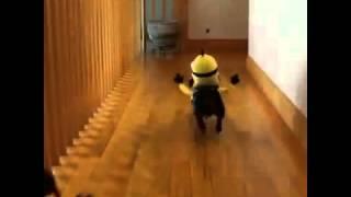 Прикольное видео Миньоны - таксы,  новинка миньоны 2015
