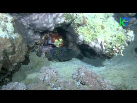 7 Merveilles Aquatiques du 02/07/2015 : Le monde de la nuit