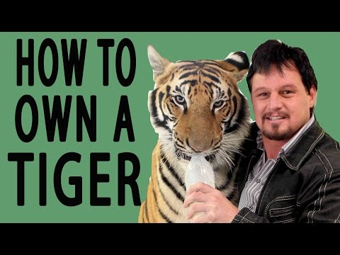 How To Own A Tiger - EPIC HOW TO