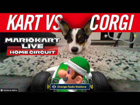 Kart VS Corgi! Mario Kart Live: Home Circuit