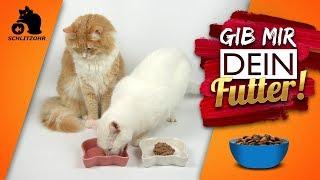 🔥Warum klauen Katzen Futter? Katze frisst der anderen alles weg | Futterneid