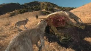 Жизнь после динозавров