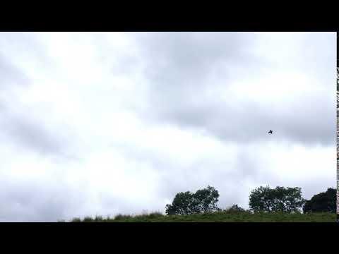 Reiver sporting game partridge shoot