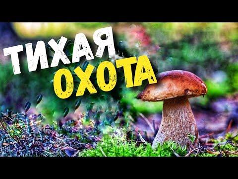 Не дают покоя в лесу грибы. Тихая охота, очередной отдых на природе. Сбор грибов 2020.