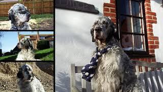 Henry Dog 2