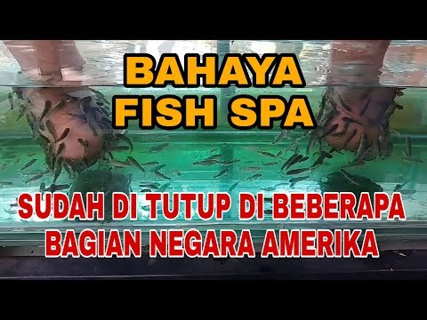 Bahaya Fish Spa, Sudah Ditutup Di Beberapa Bagian Negara Amerika