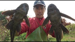 小池去河里抓毛蟹,却抓上一堆清道夫,提不上来,还抓到了大白鳝
