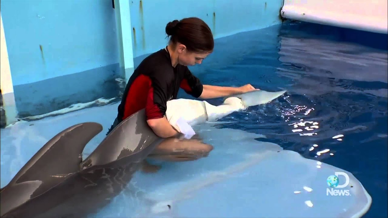 dolphin tale how real is winter u0027s story youtube