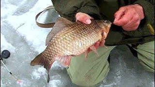 Ловля карася зимой со льда// Зимняя рыбалка