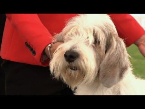 Windsor Championship Dog Show 2014 - Hound group