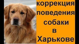 коррекция поведения собаки в Харькове Дрессировка собак в Харькове