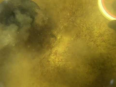 Underwater Metal Detecting With The Tesoro Tigershark