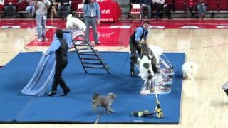 Olate Dogs, Bud Walton Arena, Arkansas