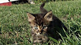 США: призыв в соцсети помог спасти котёнка (новости)