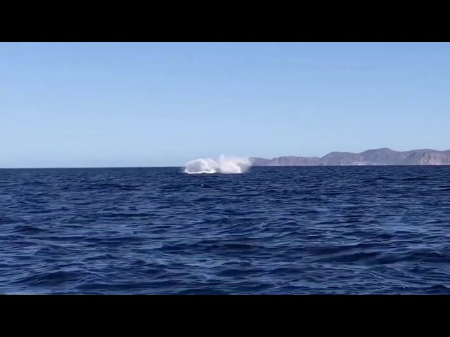 Humpback whales in our snorkeling tour! Loreto, Baja Sur, Mexico.