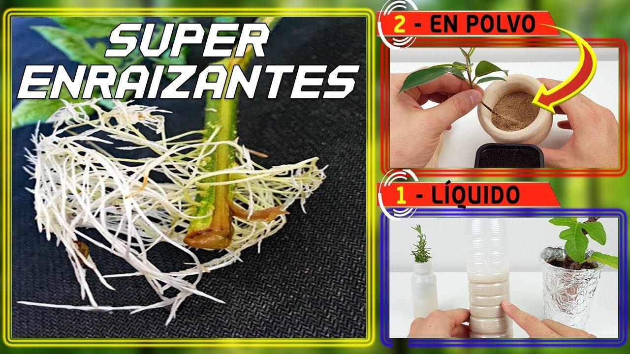 Super Enraizante natural l 2 Formas de hacerlo: Solido y Liquido | Hormonas enraizantes