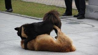 Прикол! Мир глазами бегущей собаки!