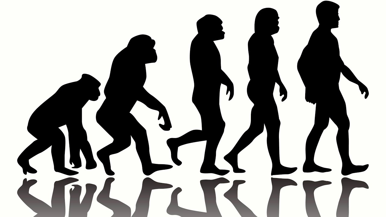 10 Weird Facts about Human Evolution - YouTube