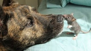 Download This dog was depressed until he met an unusual friend Mp3 and Videos