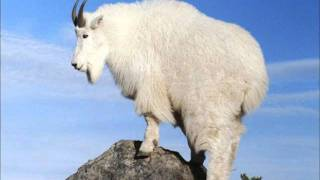Watch Mountain Goats Send Me An Angel video