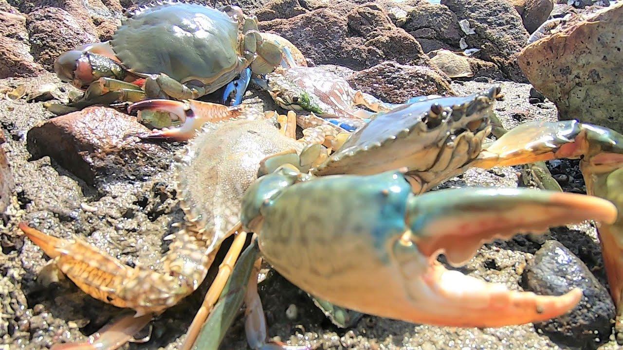 养殖场外发现螃蟹成堆聚窝,鱼儿成千上万条聚集,这场面令人沸腾