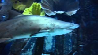 Diving in the Dubai Mall Aquarium with Sharks - Tauchen mit Haien im Dubai Mall Aquarium