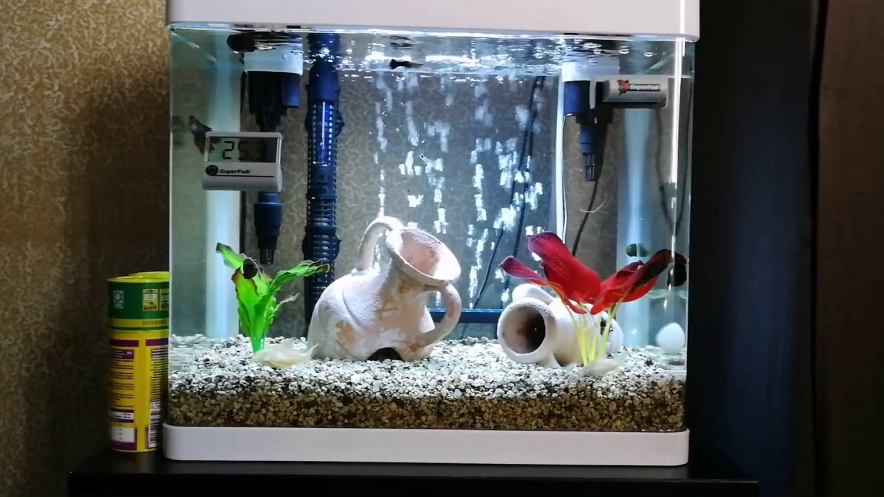 aquarium superfish panorama 50 litres youtube. Black Bedroom Furniture Sets. Home Design Ideas