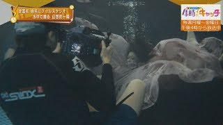 【特集】幻想的な一瞬をとらえる 水中カメラマン