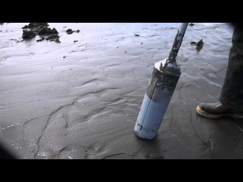 How to Dig Razor Clams With a Clam Gun