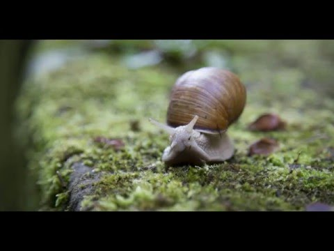 The Snail  by William Cowper