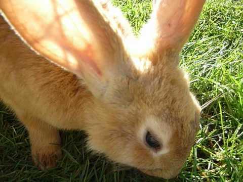Cute Brown Bunny   www.pixshark.com - Images Galleries ...
