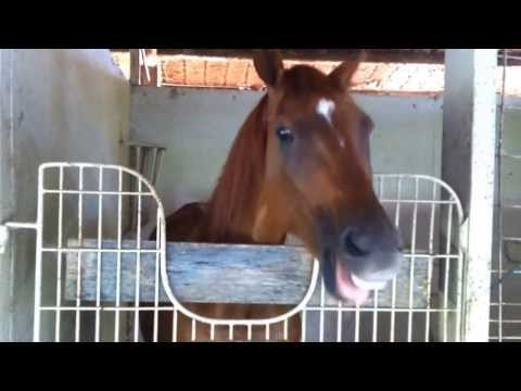 """Kirby - THE TALKING HORSE -  """"KINDA BUSY"""" With Gastric Issues"""