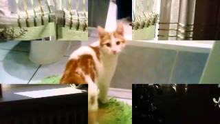kotek tańczyć chce