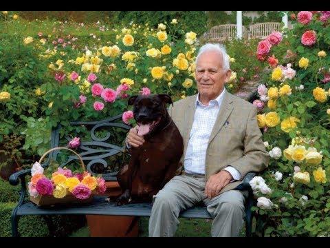 Сорта английских роз Дэвида Остина! Планирование цветников с английскими розами! Мой сад.