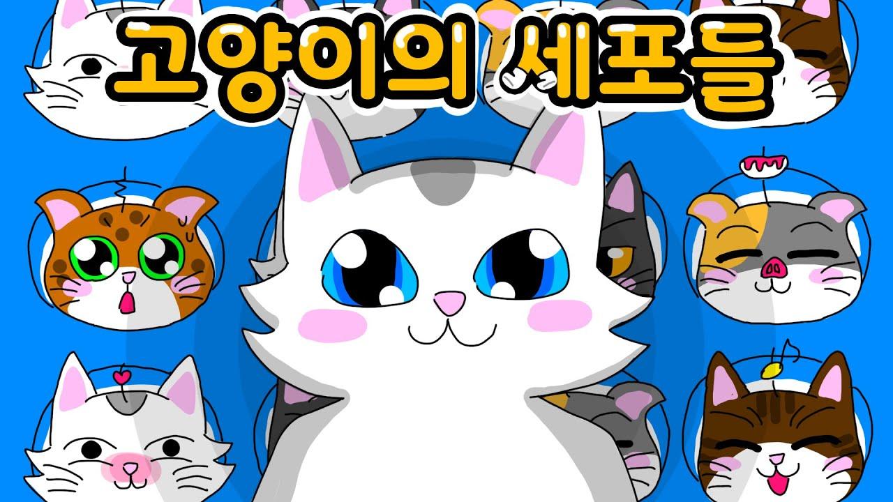 유미의 세포들..아니 고양이의 세포들!!? | 고양이산책