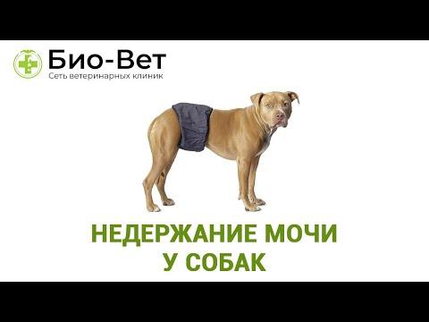 Вопрос: Собака поджимает хвост и с трудом мочится, что делать?