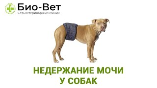 Недержание мочи у собак. Ветеринарная клиника Био-Вет.