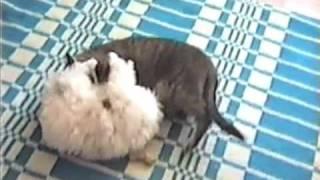 Кошка и щенок, часть 6