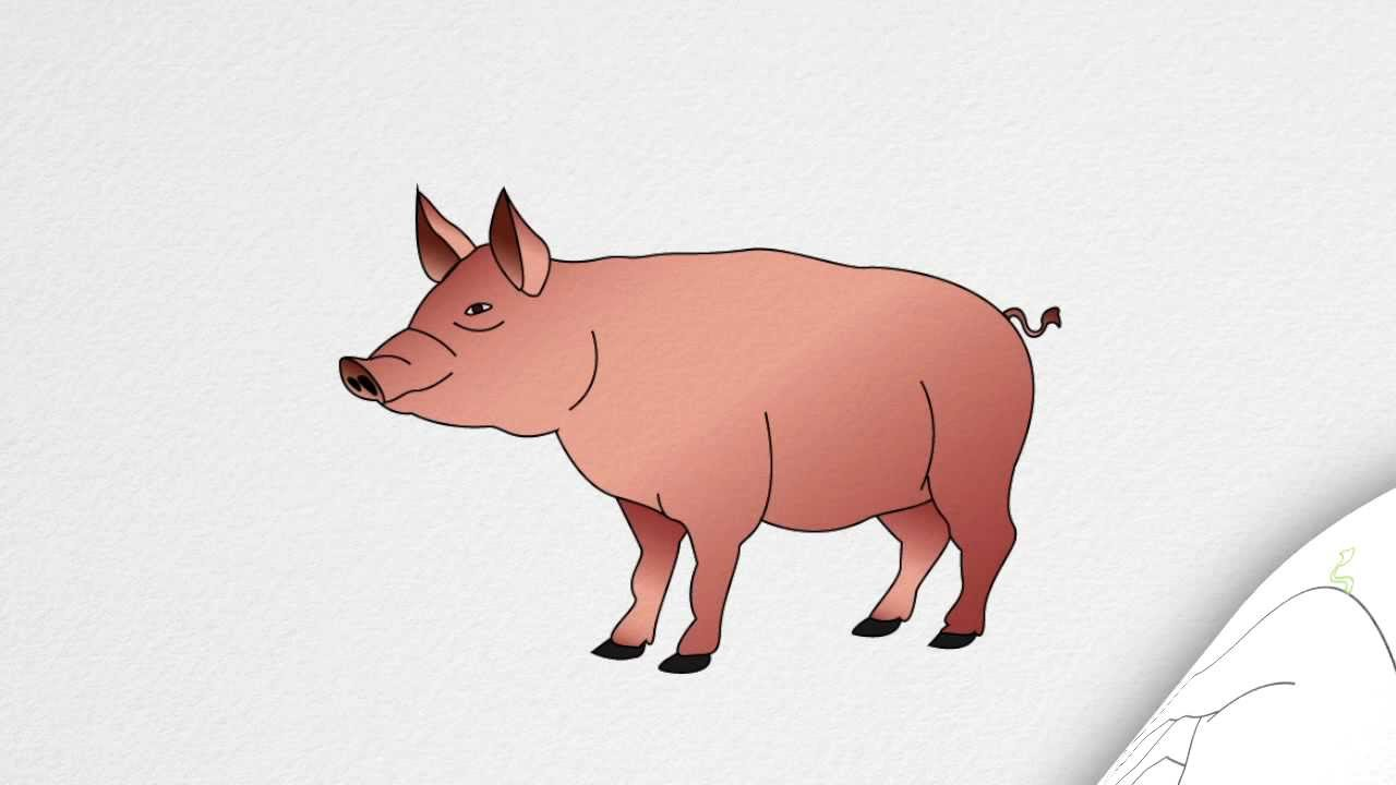How To Draw A Pig Step By Step Youtube