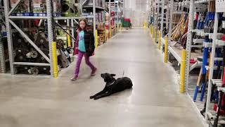 Holly out at Lowe's