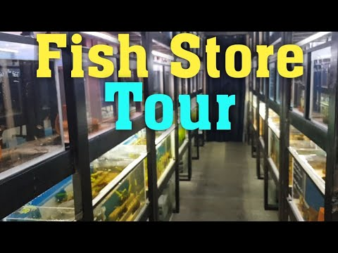 Aztec Aquarium Tour! (Adelaide Fish Store)