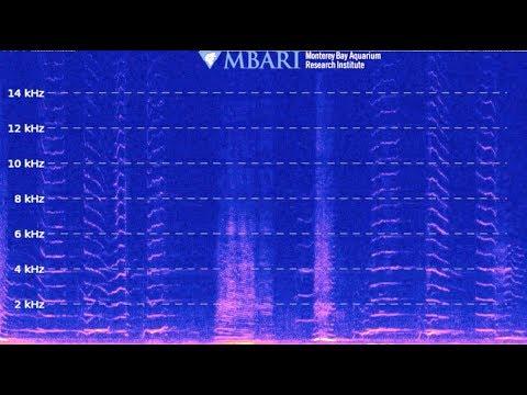 Deep-sea sound recordings—Live Stream