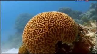 море жизни - природа. Документальный фильм BBC о коралловых рифах, морских животных и растениях