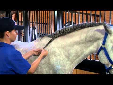 Braiding Banding Amp Taming Manes Amp Tails How To Use Mane