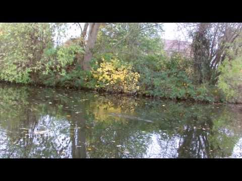 Pike Float Fishing On The Canal - Chrisnsamfishing