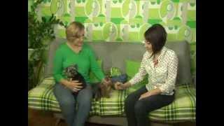 Домашний зоопарк: Йоркширский терьер(, 2013-11-11T08:18:44.000Z)