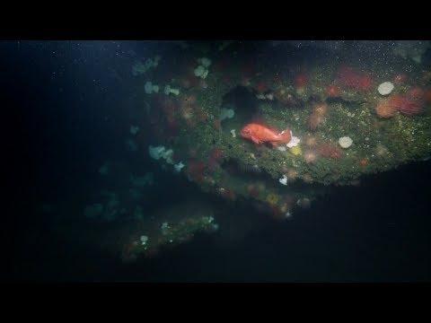Exploring USS Bugara With Eyewitnesses to History | Nautilus Live